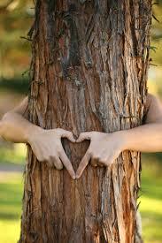 treehugher